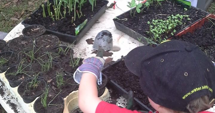 Gardening with kids 6